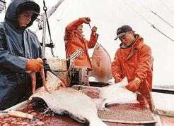 Halibut longlining aboard the <i>Summer Wind</i>, Queen Charlotte Islands, 1994. L to r: Dale Erickson, Corey Erickson, Todd Vick. Peter A. Robson photo