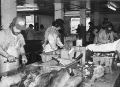 Processing spiny dogfish for the food fish market during the 1980s. Courtesy DFO
