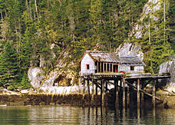 The ruins of  the old Bones Bay salmon cannery. Peter Vassilopoulos photo
